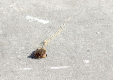 Small Crab. A small crab tangled in fishing line after being caught off of a fishing pier stock images
