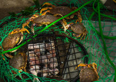 Small Crab Trap Royalty Free Stock Images