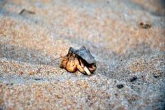 Small crab Royalty Free Stock Image