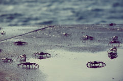 Small crabs along the coast in galapagos island Stock Photo