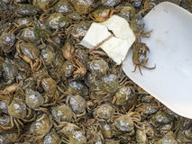 Small crabs Stock Image
