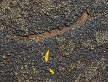 A small crack in the road surface. Small crack in the road surface filled with water and two tiny yellow autumn leaves image with copy space royalty free stock images