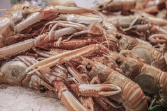 Small crayfish in fish market Stock Photo
