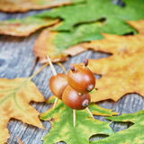 Small creature made of chestnuts and acorns Royalty Free Stock Image