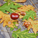 Small creatures made of chestnuts and acorns Stock Images