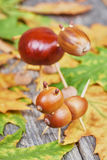 Small creatures made of chestnuts and acorns Royalty Free Stock Photography