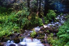 Small creek Royalty Free Stock Photography