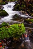 Small creek Stock Images