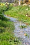 Small creek. With green vegetation Royalty Free Stock Photography