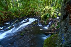 Small Creek Stock Photography