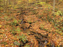 Small Creek in Autumn Royalty Free Stock Photos