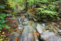 Small Creek In Autumn Forest Stock Photography