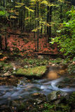 Small Creek in Autumn Mountain Forest Royalty Free Stock Photos