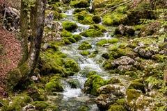 Small creek Royalty Free Stock Photo