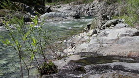 Small Creek Feeding Into North Fork American River stock footage