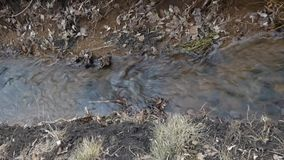 Small creek flowing between old grass and foliage. Small river flowing between old grass and foliage. Clear creek running in park or forest. Brown leaves fly on stock video footage
