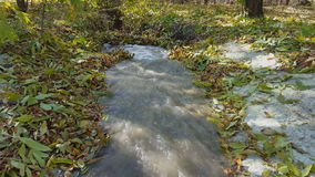 Small creek in the forest. Fallen leaves in a stream. Autumn stock footage