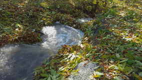 Small creek in the forest. Fallen leaves in a stream. Autumn stock video footage