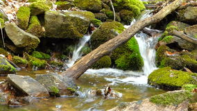 Small creek in forest Royalty Free Stock Image