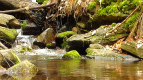 Small creek in forest Royalty Free Stock Images