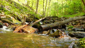 Small creek in forest Royalty Free Stock Photo