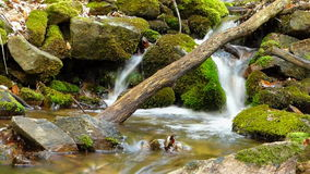 Small creek in forest in slow motion blur Stock Images