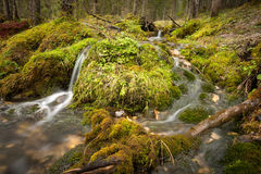 Small Creek in the Forest surrounded by Moss Royalty Free Stock Photography