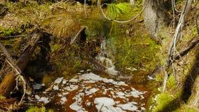 Small creek stock footage