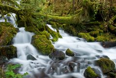 Small creek in the gorge Royalty Free Stock Photos
