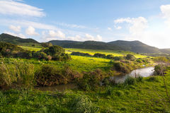 Small creek in a green filed in Sardinia Stock Images