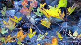Small Creek and Leaves stock video footage