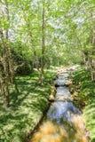 Small Creek Through Lush Green Garden Stock Photos