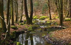 Small creek with moss coverd stones. Small river in forest with many moss covered stones. Czech republic, reservation `Voderadske buciny` Voderady ´s stock image
