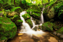 Small creek in a mossy forest Stock Image