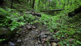 Small creek out in the wood. stock video footage