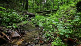 Small creek out in the wood. stock footage