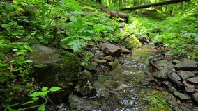 Small creek out in the wood. Stock Photography