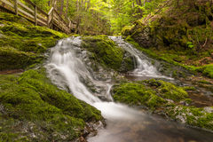 Small creek in the park Royalty Free Stock Photo