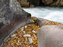 Small creek on the river. With yellow leaves in it Royalty Free Stock Photography