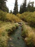 Small creek in the Rockies royalty free stock image