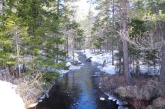 A small creek is running thru a forest. A small creek is finding his way thru trees and snow Royalty Free Stock Photography