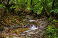A small creek that runs through a wide valley full of fallen leaves, ferns and contorted beautiful trees. A small creek that runs through a wide valley in a stock image