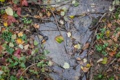 A small creek stream with branches and leaves in it royalty free stock photo