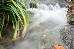 Small creek time lapse wild water. With leaves and grass Stock Images
