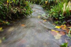 Small creek time lapse wild water. With leaves and grass Royalty Free Stock Photo
