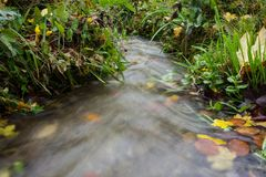 Small creek time lapse wild water. With leaves and grass Royalty Free Stock Images