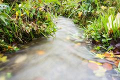 Small creek time lapse wild water. With leaves and grass Stock Photos