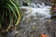 Small creek time lapse wild water. With leaves and grass Stock Photography