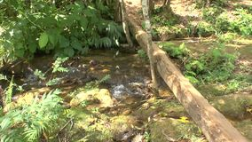 Small Creek in Topes de Collantes stock footage