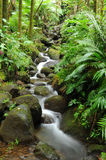 Tropical Creek Stock Photo